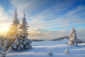 Fiori di Bach inverno
