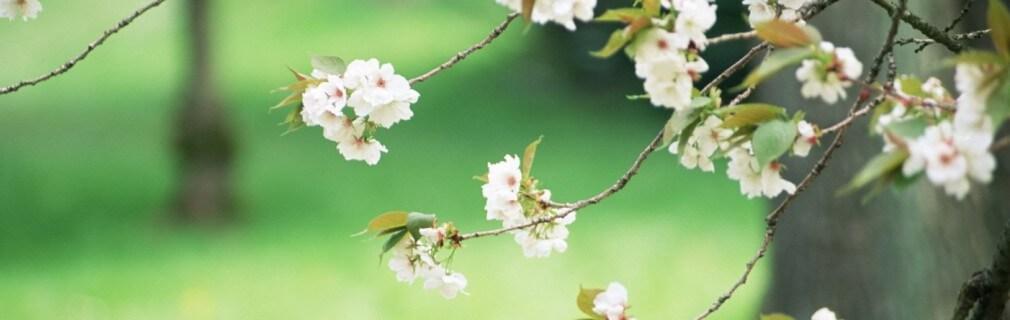 primavera e estate
