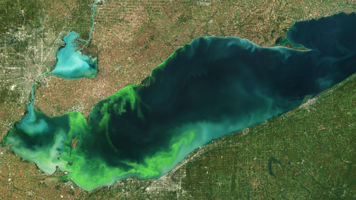 E3Live alga Klamath